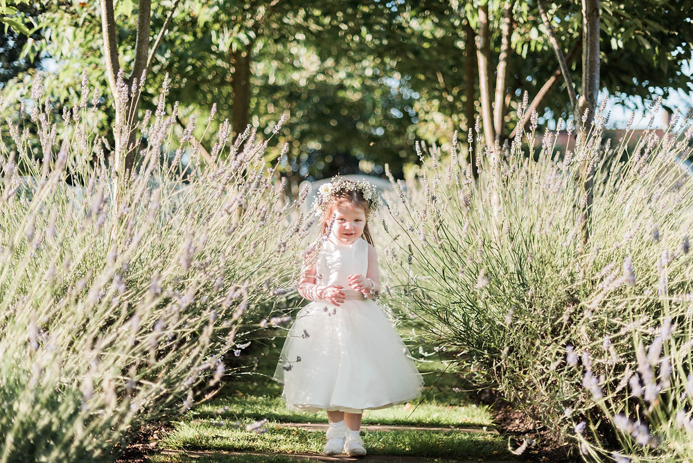 Flower girl exploring in the lavender at a Derbyshire wedding. Summer wedding photography portrait.
