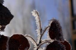 frozen_mist_twig_winter_snow
