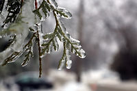winter ice ice on branches scenery photograph art color prints
