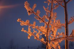 morning_mist_frost_snow_tree_winter