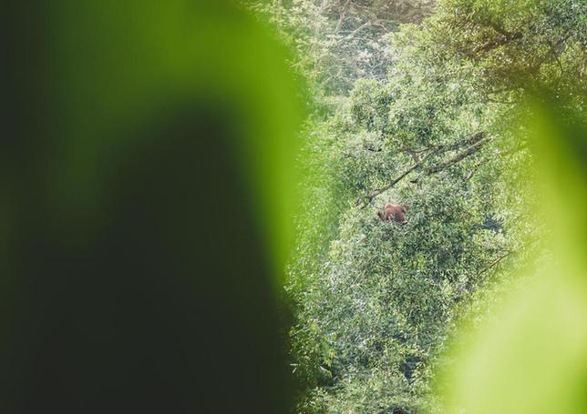 Mr. Orangutan