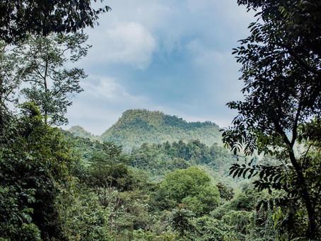 Volunteering in Sumatra #1 Green life project
