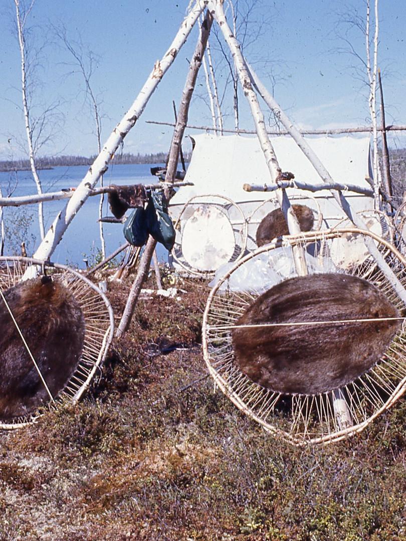 Ed Durgin - Beaver pelts spring hunt at