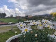 Primavera al Casale Tuscolano