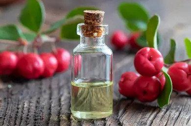 Organic Wintergreen Essential Oil 10g (£2.51/10g)