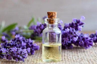 Organic Lavender Essential Oil 10g (£3.18/10g)
