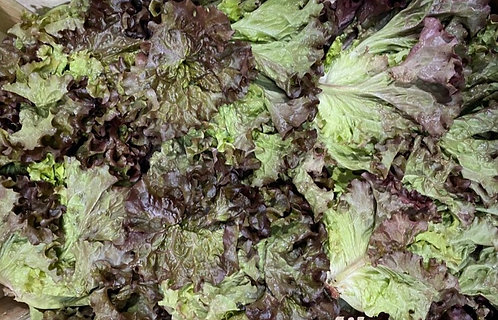 Organic Batavia Red Lettuce (each)