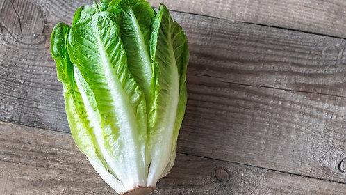 Organic Cos Lettuce (each)