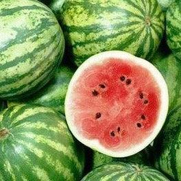 Organic Mini Watermelon (each ~1kg)