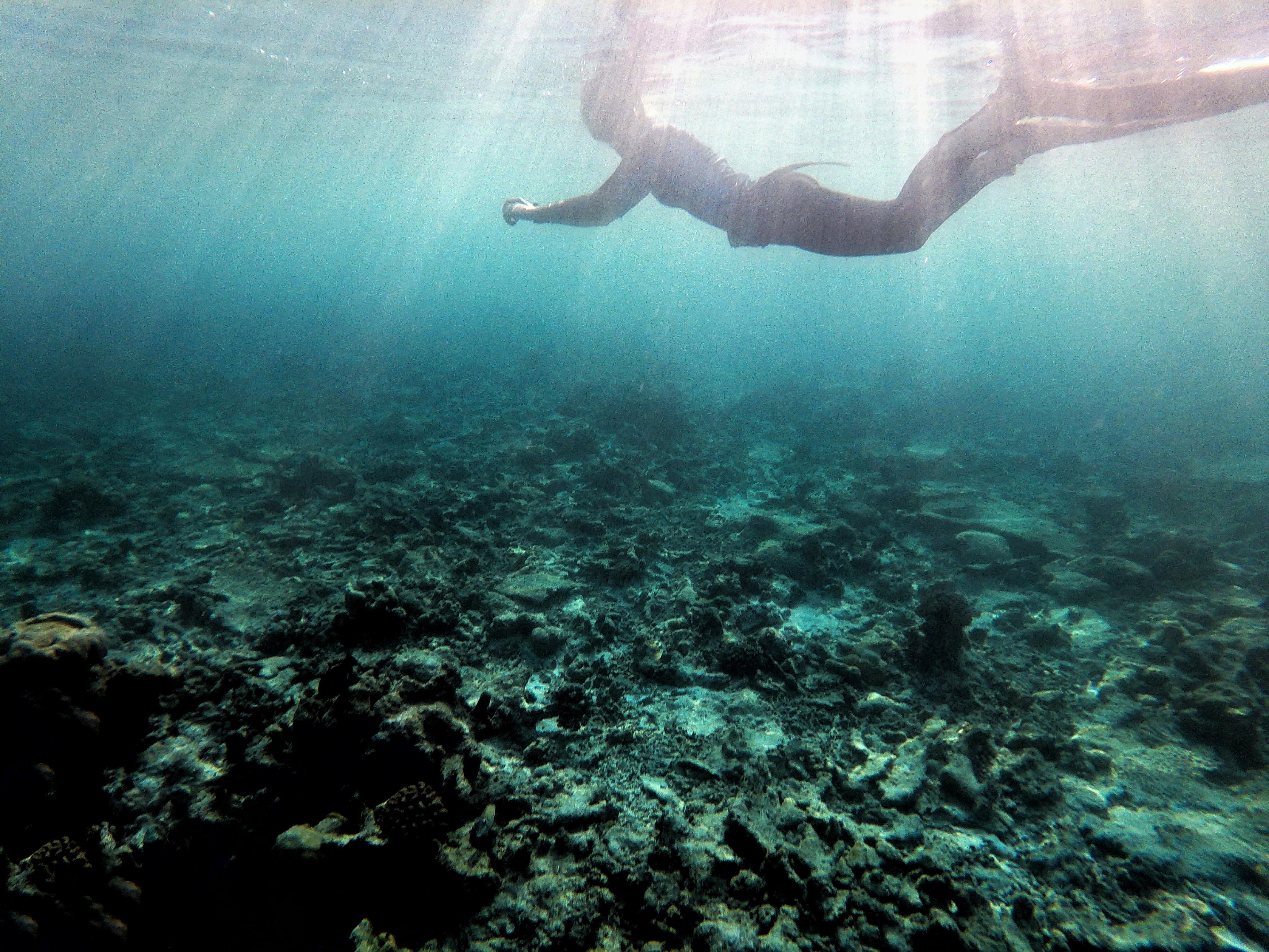 serdenia snorkeling