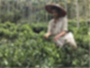 Formosan Farms