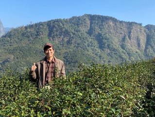 福爾摩沙農場之光: 阿里山高山精品茶簡大哥好文