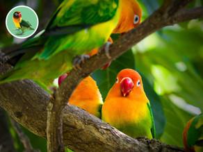 Najobľúbenejšie papagáje a vtáctvo
