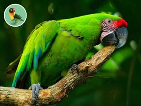 Kupujeme si papagája