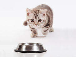 puppy kitten food_2.jpg