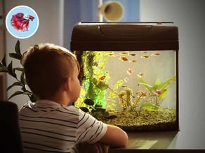 Starostlivosť o akvárium