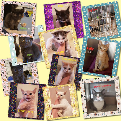 Cat collage.JPG