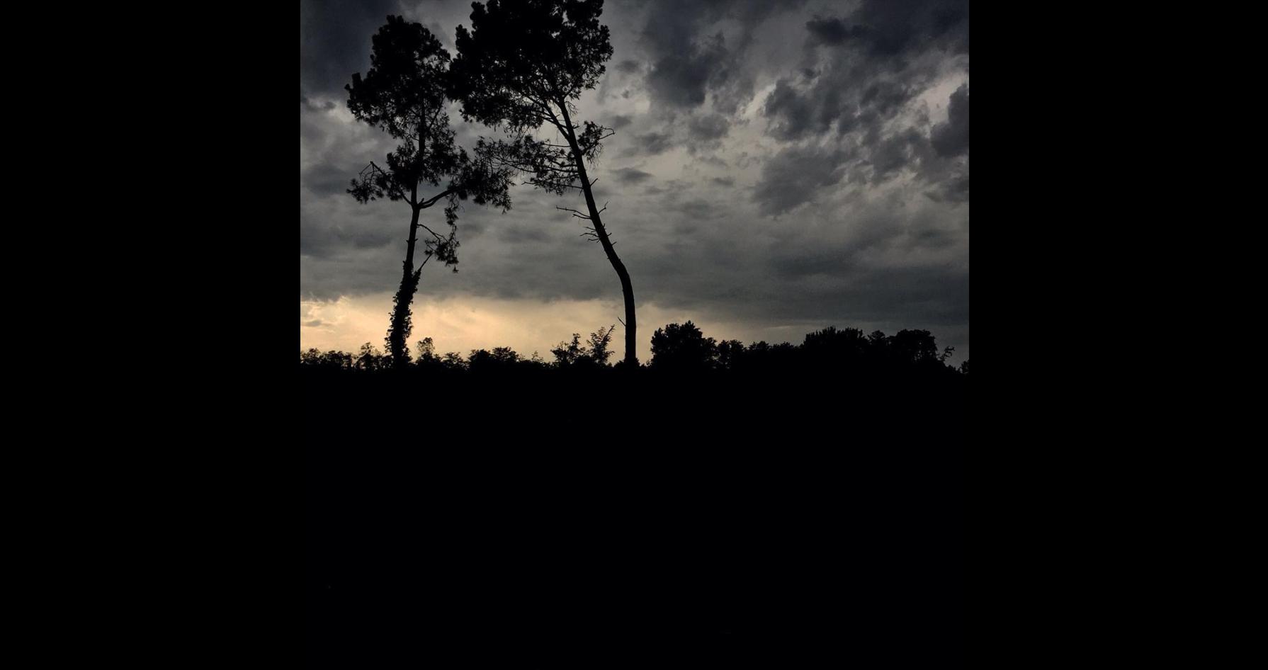 les pins