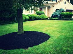 Circular Black Mulch