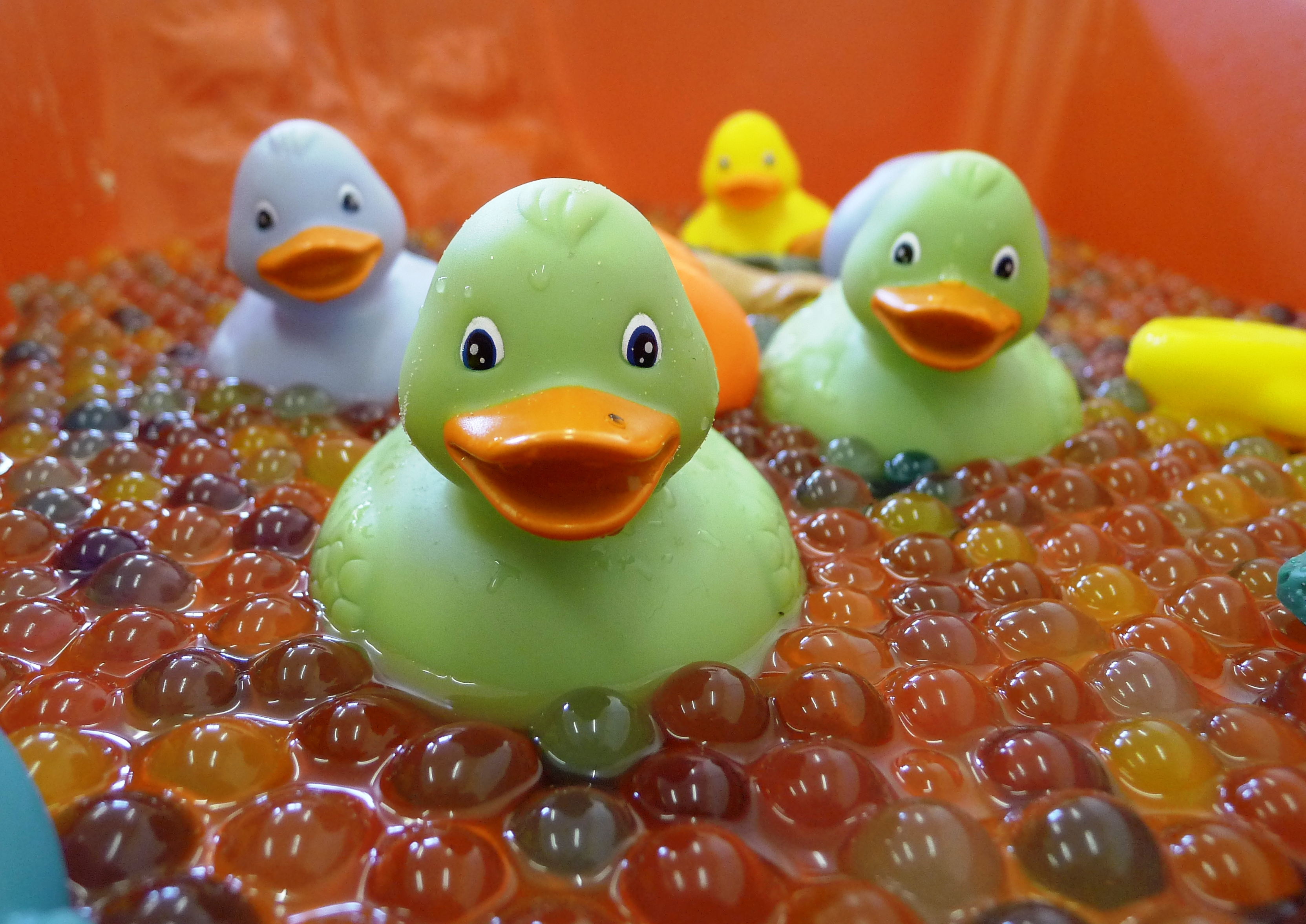 Ducks in water beads