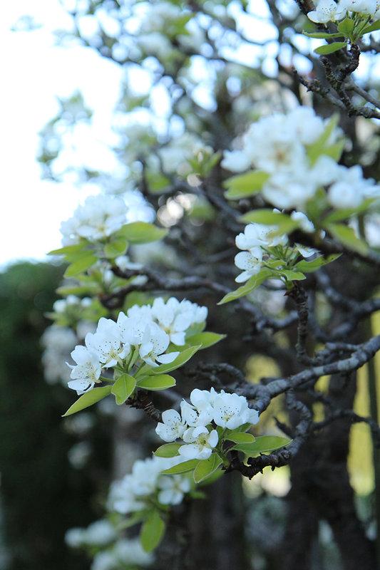 L'éveil_du_printemps_.JPG