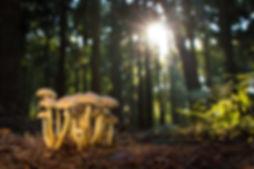 mushroom-2087997_1280.jpg