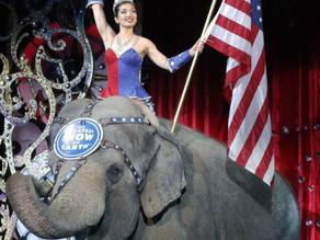 Editorial: Elephant On A String by Ashley Thomas