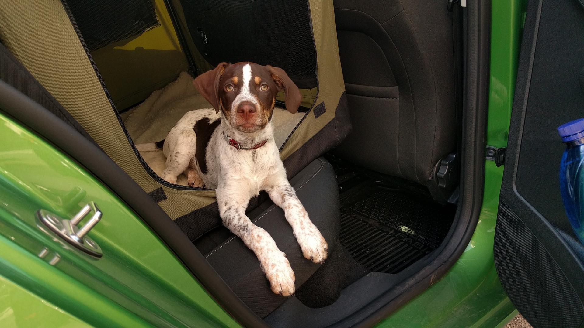 V autě