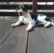 Dobby na terase