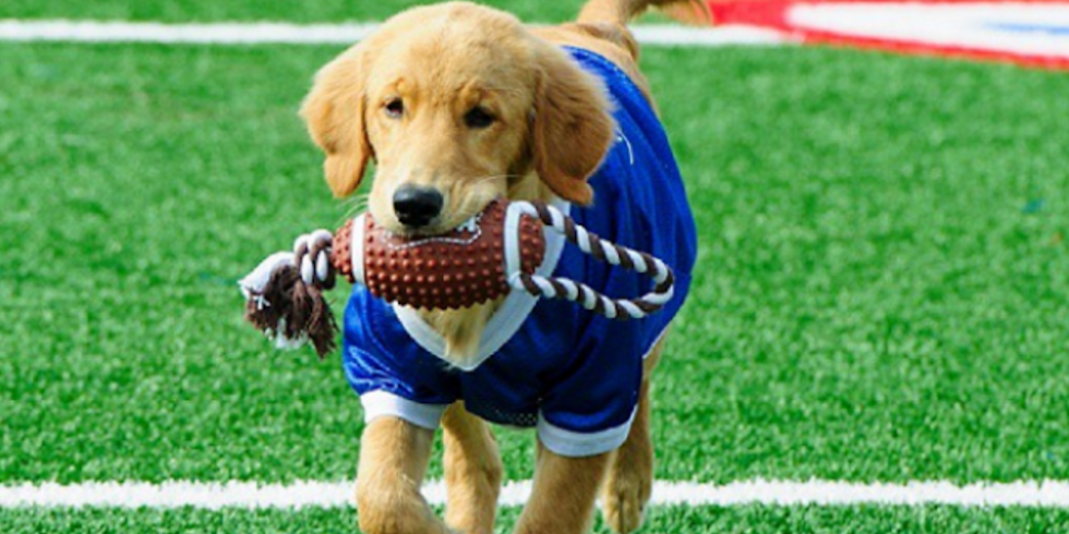 The Doggy Combine