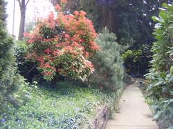 Outside walking path