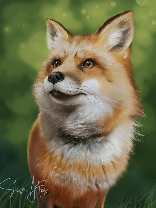 Finnegan Fox 11x14 print limited to 50