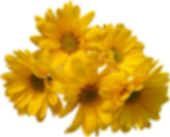 23441-2-yellow-flowers-bouquet-transpare
