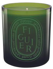 Figuier/ Fig Tree