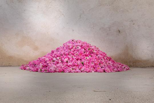 MATIERE PREMIERE organic Rose Centifolia