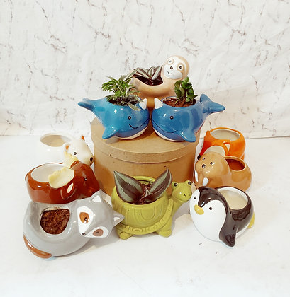 Ceramic Animal Planters with Live Plants