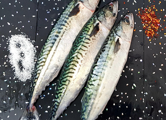 Fresh Brixham mackerel