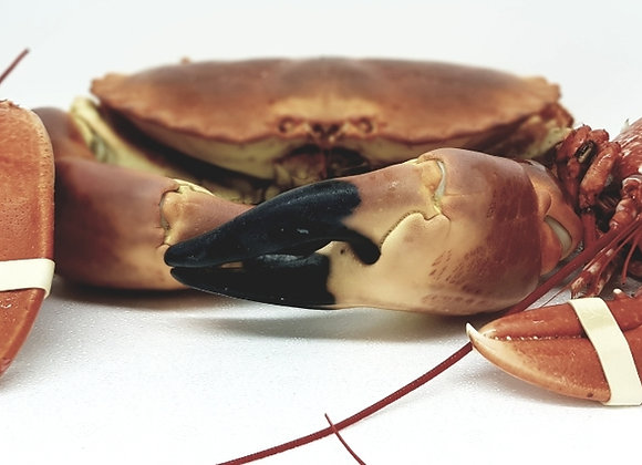 Fresh cooked Brixham crab