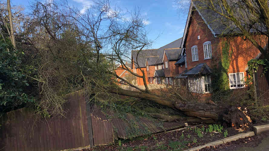 fallen tree in sindlesham berkshire