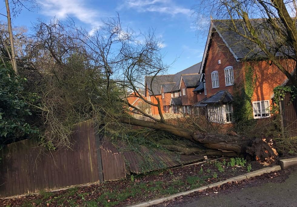 fallen tree in sindlesham berkshire