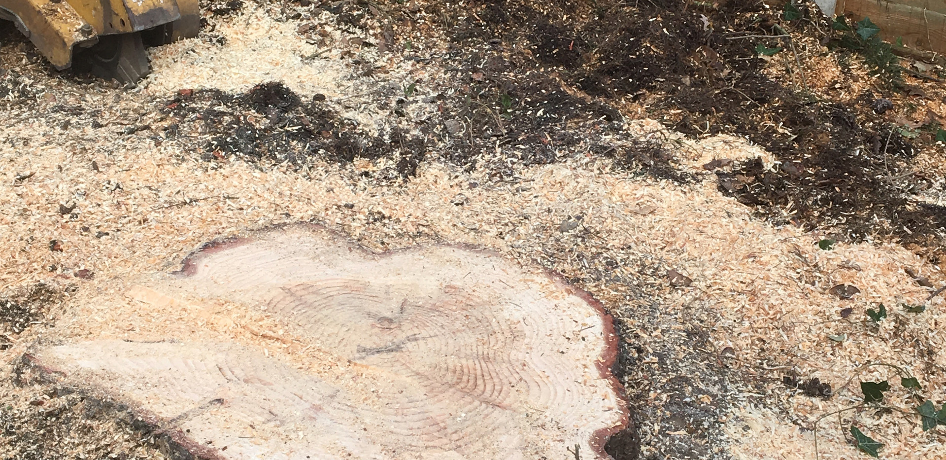 Bennetts Tree Care tree stump removal
