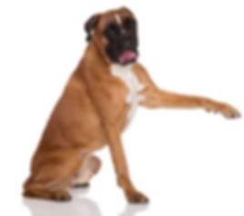 Pet Behaviour Clinic Cork Social Media..