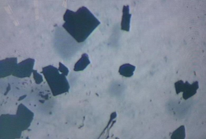 Crystals of the new plutonium(II) compound, which is a deep purple colour: