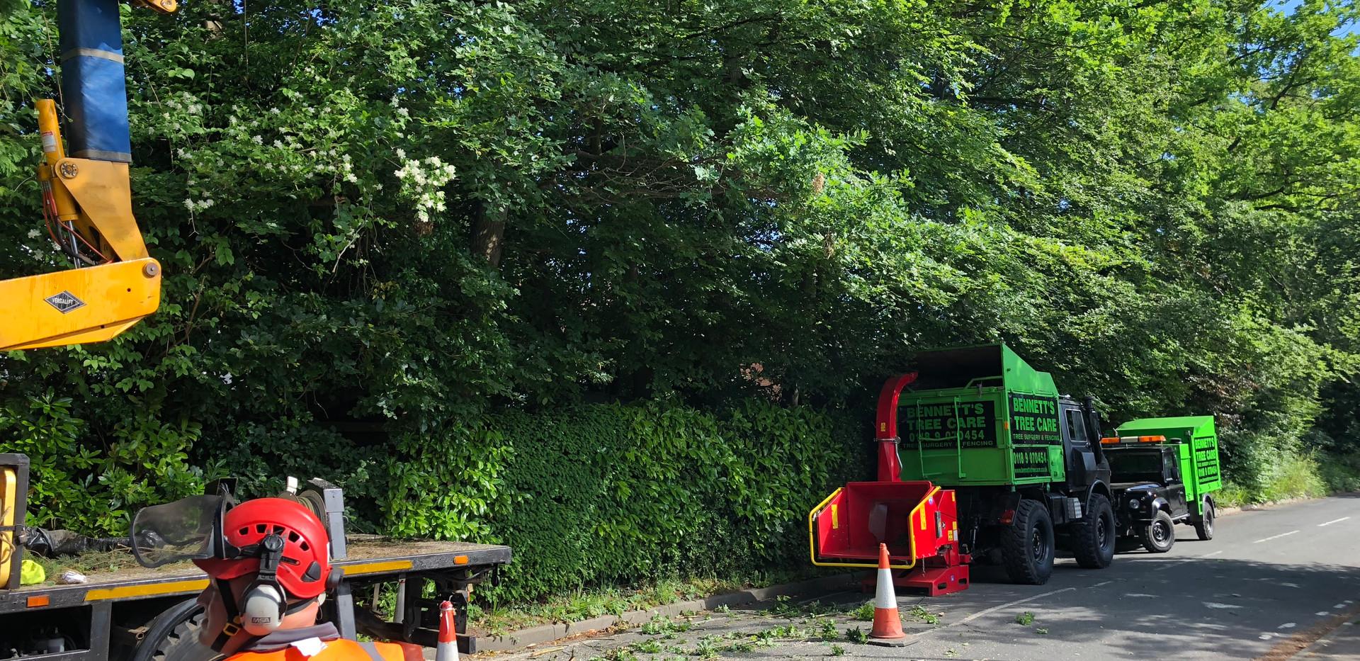 Bennetts Tree Care  road side tree work wokingham beach trebeach reductione reduction