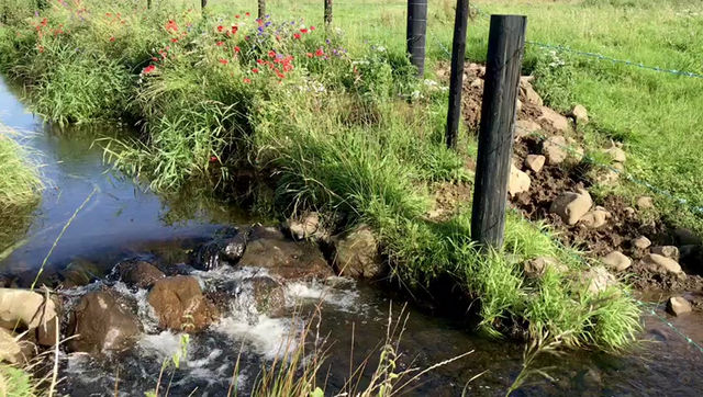 The Quintessential Sounds of Slemish Cottage's Babbling Brook.