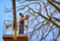 Bennetts Tree Care Tree Pruning.JPG