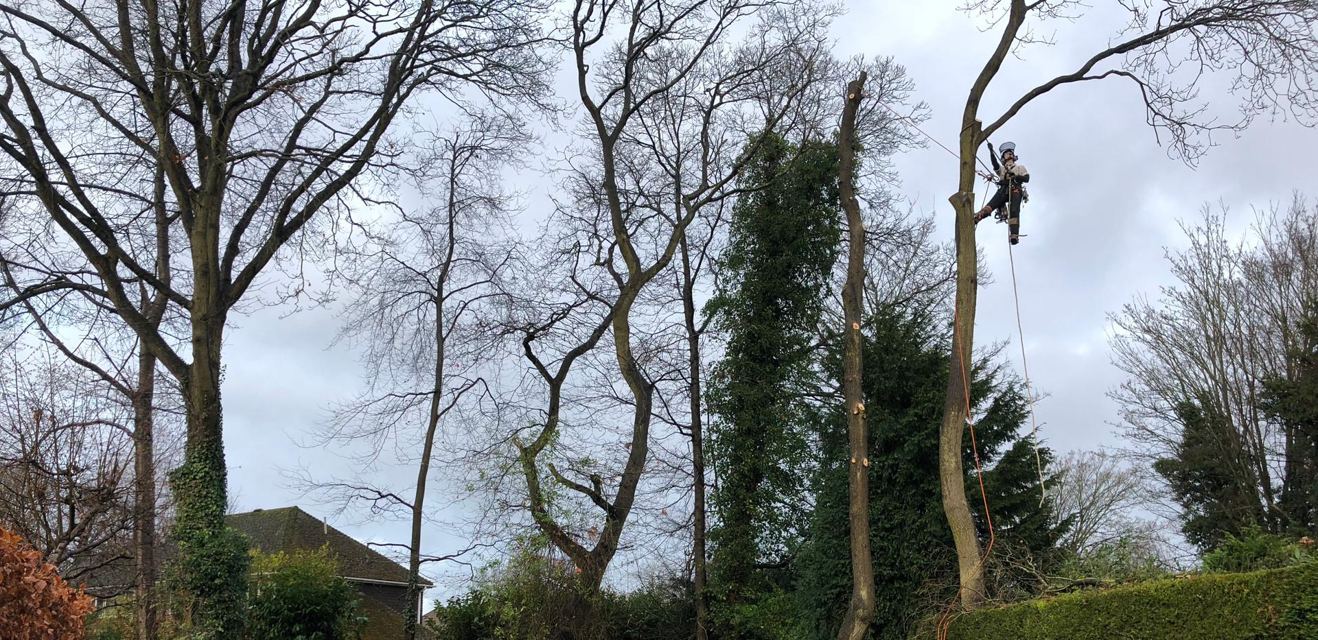 tree removal sandhurst