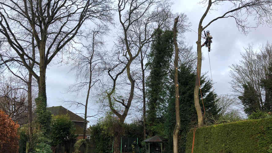 tree removal sandhurst