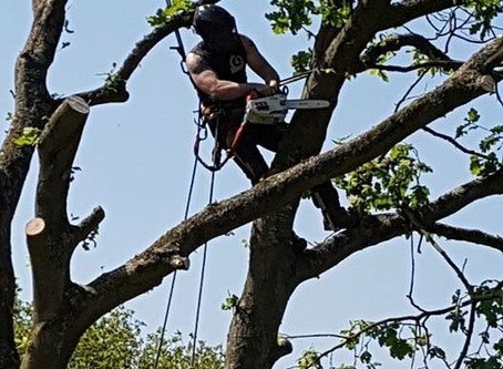 What Is A Tree Surgeon, and Why Do You Need One?