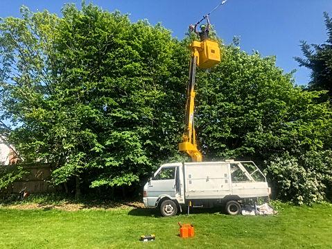 Bennetts Tree Care 022.jpeg